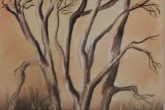 Dry Creek-Scyamores