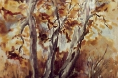 Dry Creek-Fall color