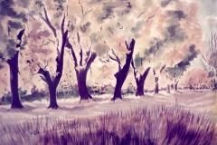 Yakima-Shadows